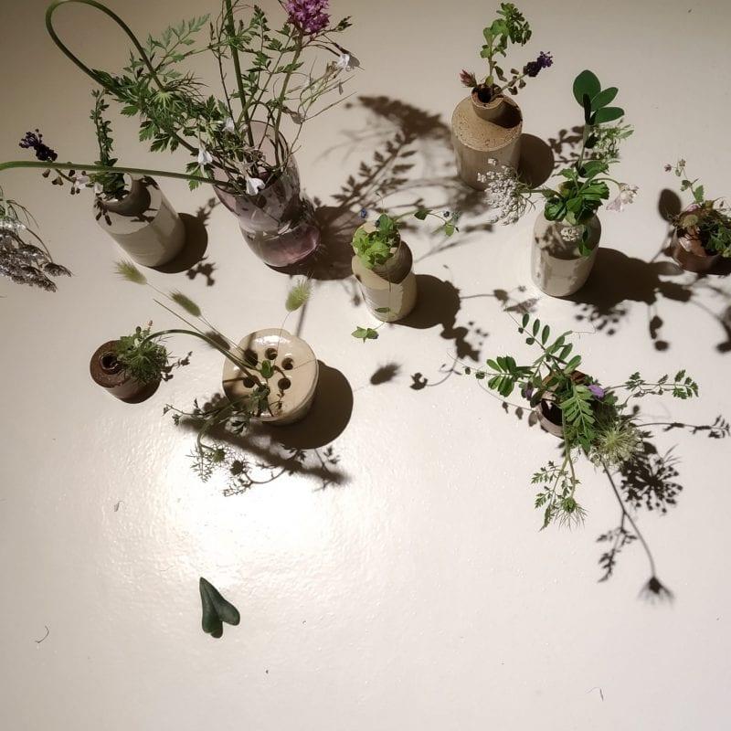 plantas-scaled-800x800
